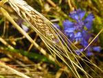 Samen und Hülsen aus aller Welt